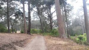 Path in Golden Gate Park