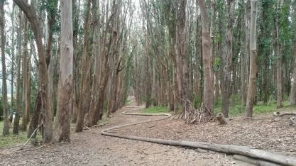 Great trail in the Presidio